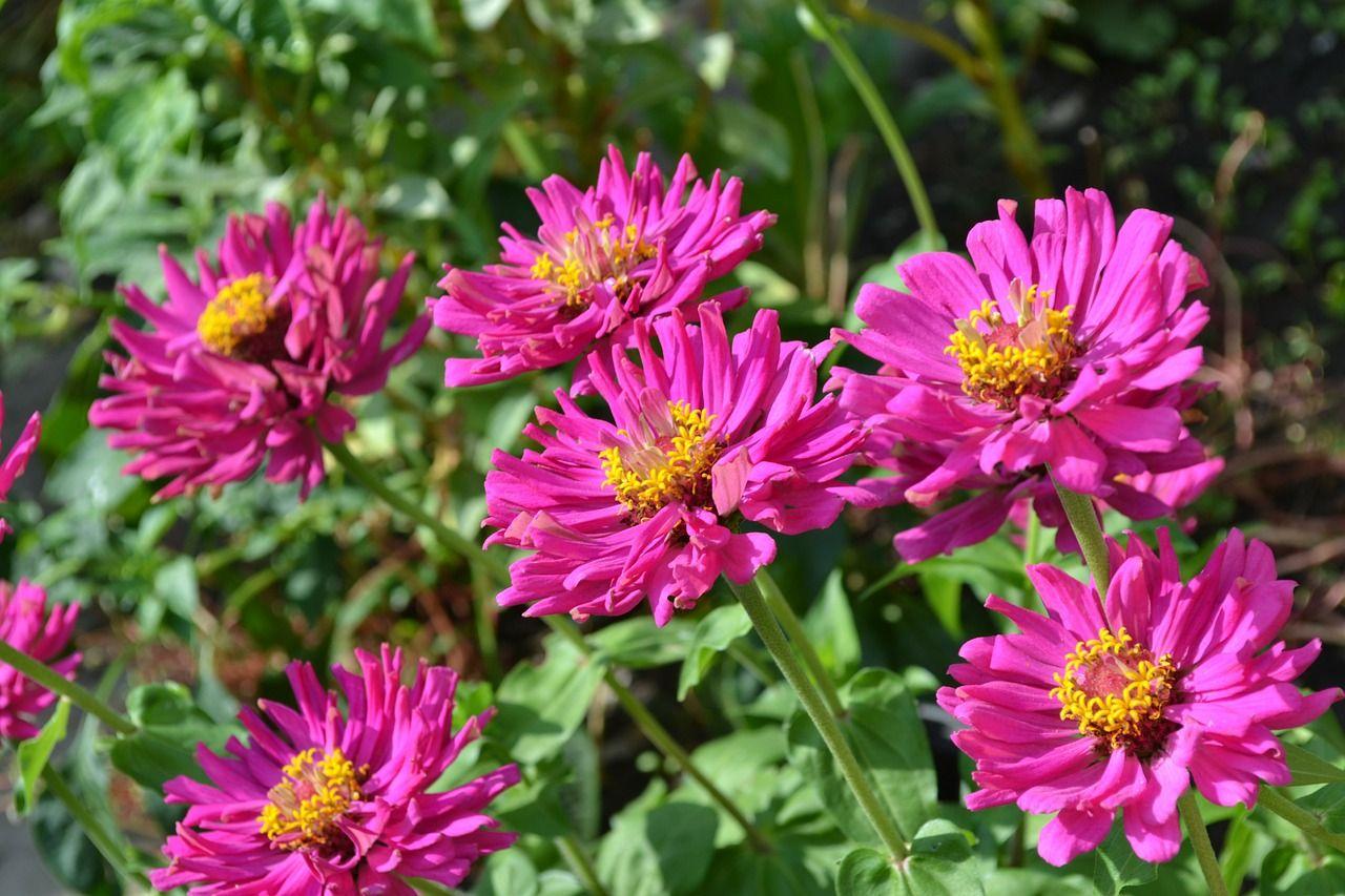Te damos diversos trucos y consejos de limpieza para el jardín