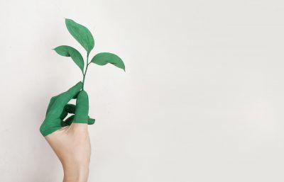 Cómo apostar por una oficina ecológica