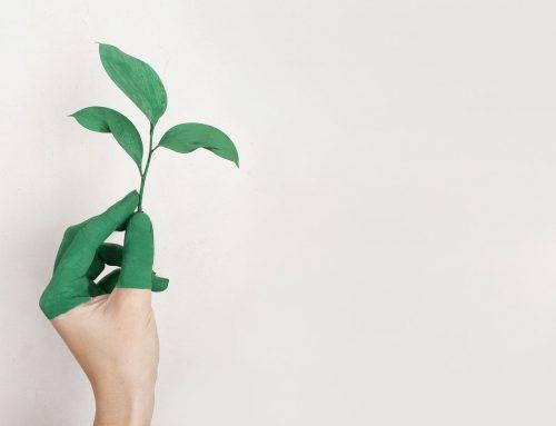 Pautas para lograr tener una oficina ecológica