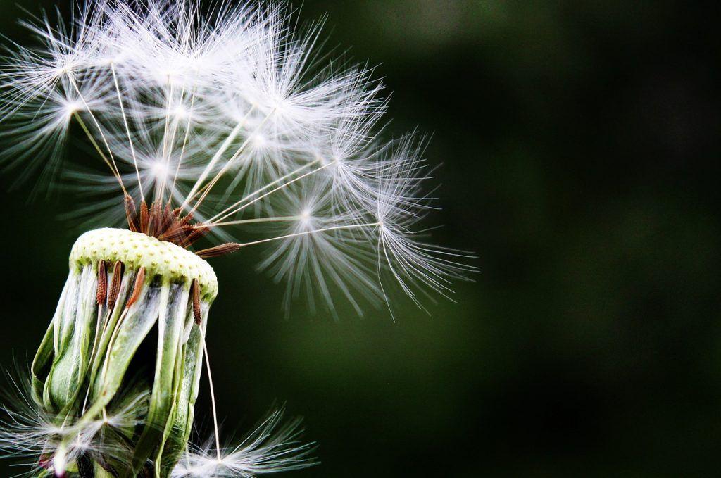 Trucos para reducir la alergia primaveral en casa