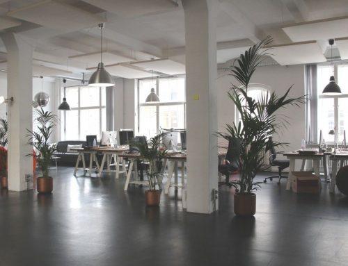 5 plantas para limpiar el aire de tu oficina y respirar mejor
