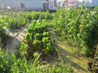 Qué deberías plantar en junio en tu huerto