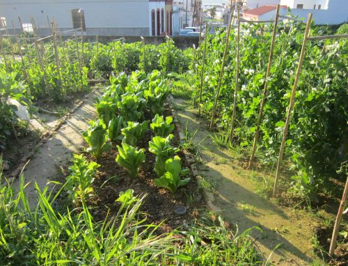 ¿Qué puedo plantar en junio en mi huerto?
