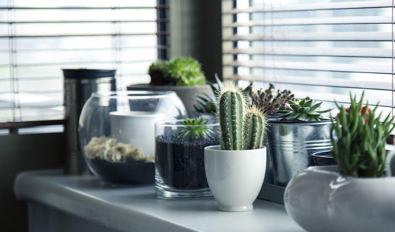 7 ideas ecológicas para decorar tu casa