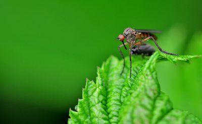 7 plantas para ahuyentar a los mosquitos que debes tener en casa