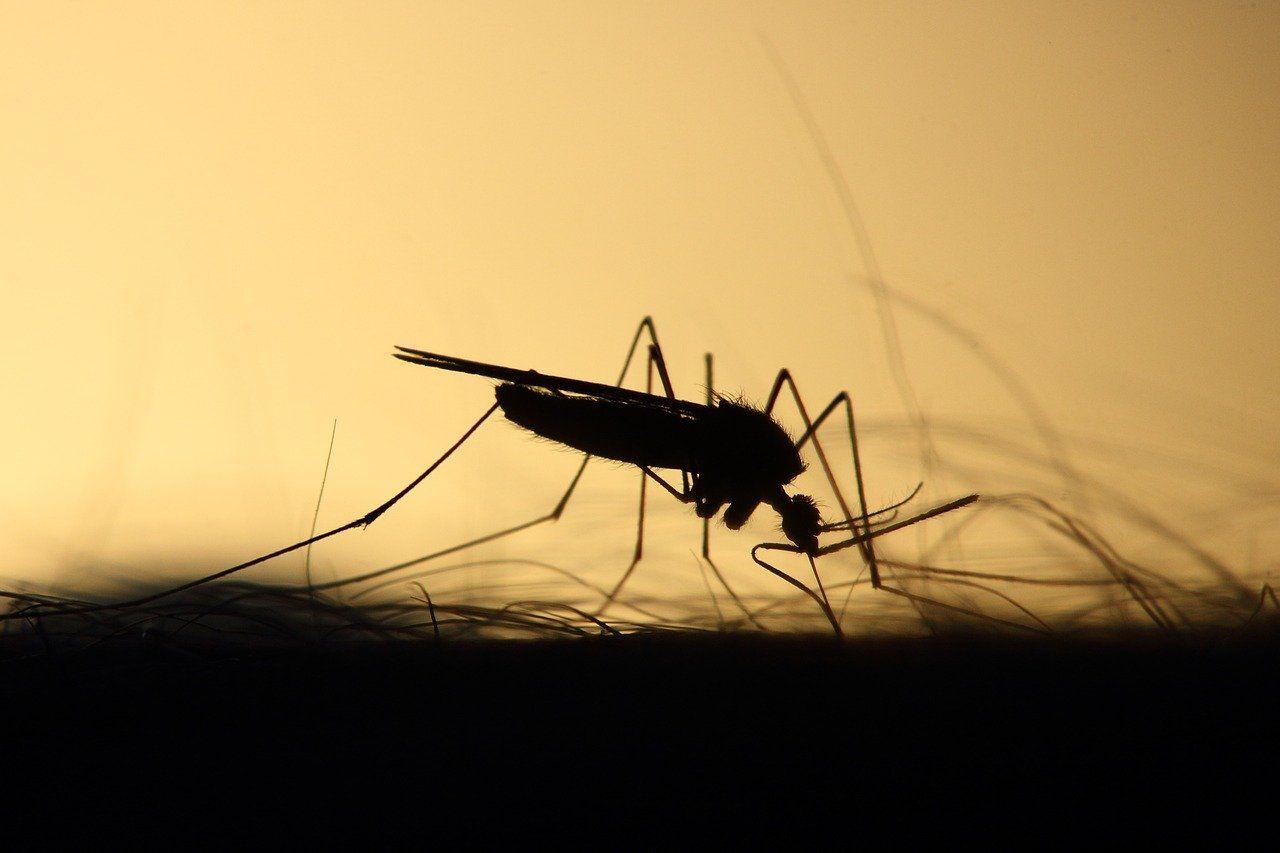 7 trucos caseros muy efectivos para ahuyentar a los mosquitos