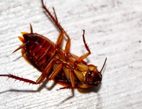 Remedios naturales para evitar cucarachas en casa