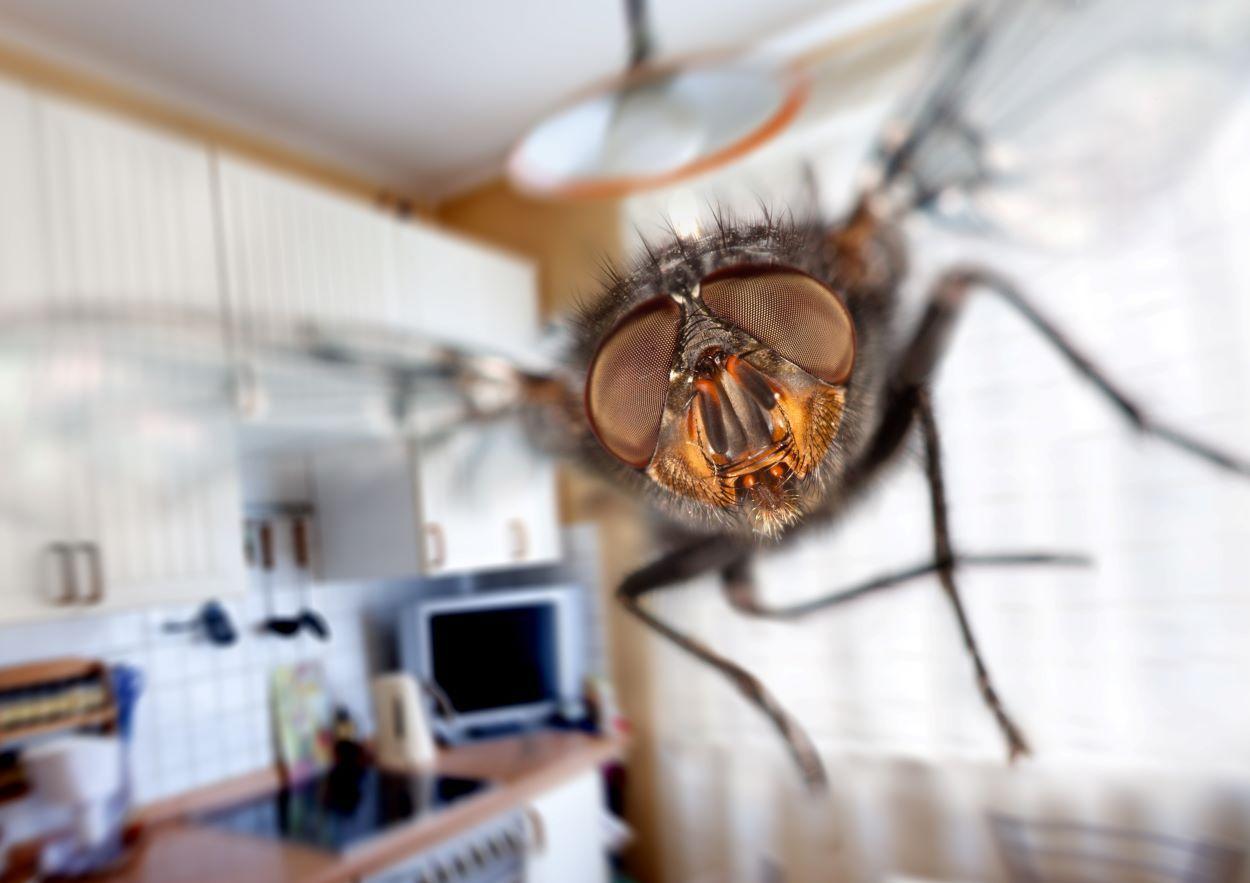 Remedios caseros para espantar a las moscas este verano