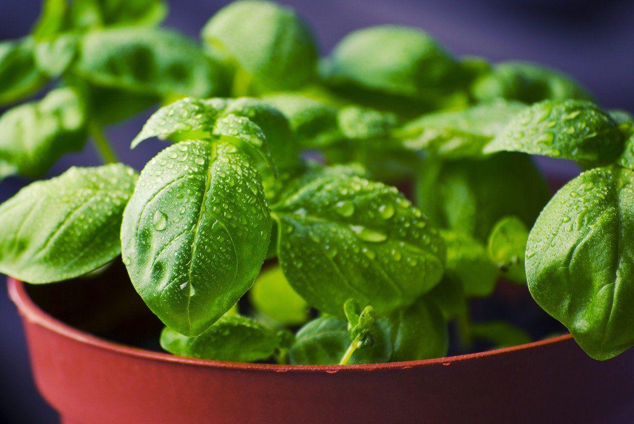 cosas que no sabías que podías plantar en casa