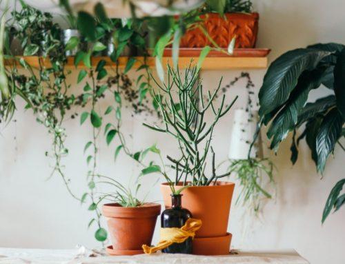 Consejos para cuidar las plantas en los meses más fríos del año