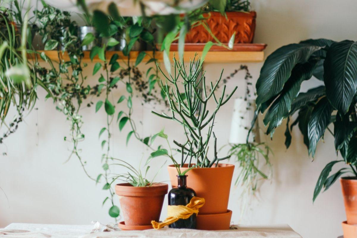 Consejos para cuidar las plantas en los meses más fríos