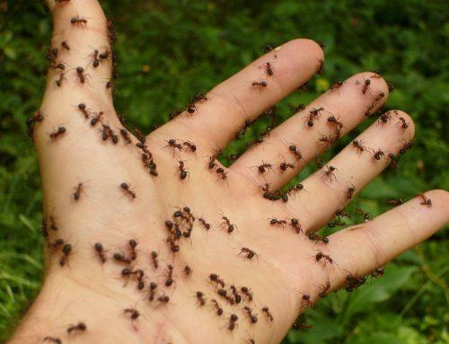 Cómo evitar plagas de hormigas en casa