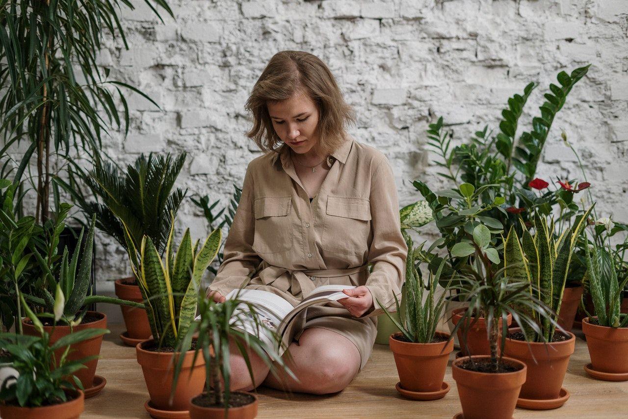 Cada cuánto hay que cambiar la tierra de las plantas, según los especialistas